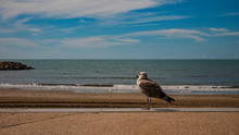 Seagull Watching The Sea