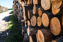 Log Stack With Alder Trees; Pa...