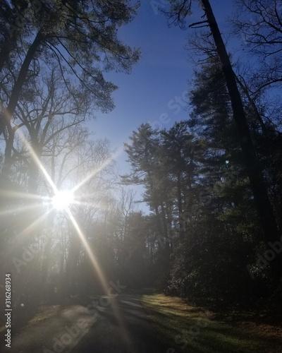 forest, sky, sun, nature, light, tree, fog, landscape, road, mist, trees, night, dark, cloud, morning, sunlight, sunset, sunrise, blue, autumn, wood, winter, green, summer, clouds