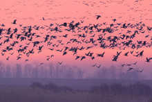 Flying Birds Over The Winter L...