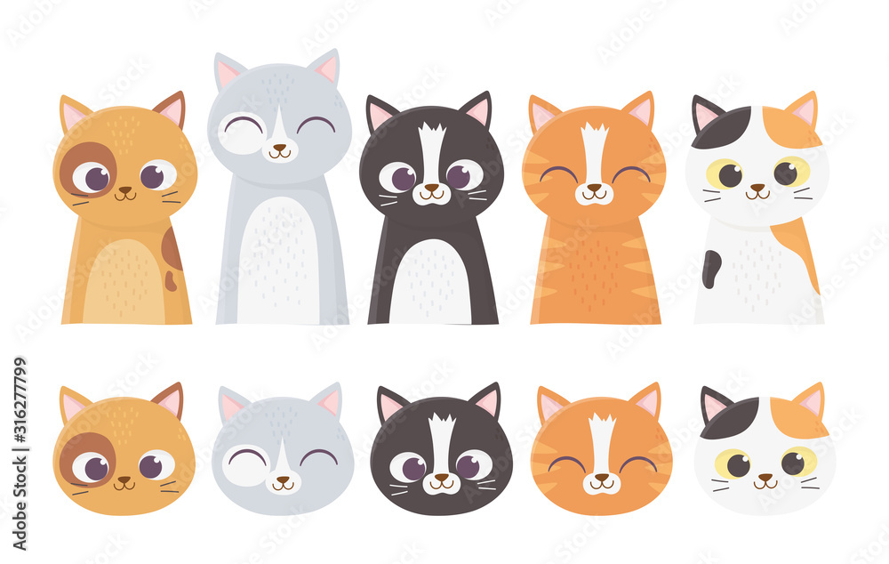 Fototapeta pet cats faces differents feline breed cartoon