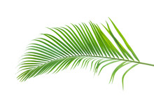 Green Palm Leaf Isolated On Wh...