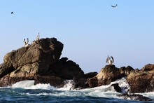 Pelicans On The Rocks At The Pacific Coast Of Oaxaca Mexico