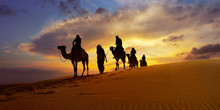 Caravan Of Camel In The Sahara Desert Of Morocco At Sunset Time