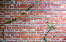 Brick Wall Texture With Green ...