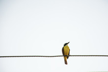 Yellow Bird On The Wire