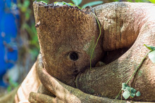 Close-up Of A Knothole In A  Tree Trunk In The Tropical Forrest Of The Island Of Ko Phayam In The South Of Thailand Knothole, Tree, Trunk, Thailand, Ko Phayam, Wooden, Knobby, Wood, Knot, Bra
