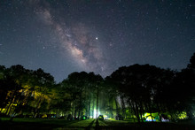 Milky Way Over Pine Forest In ...