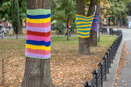 Tela Trees wearing colorful knitted scarves in autumn park