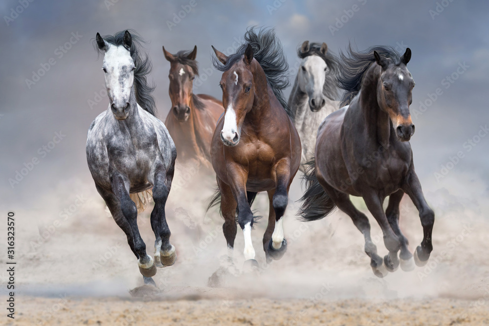 Horse herd run free on desert dust against storm sky