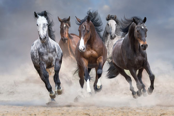 Fototapeta Do salonu Horse herd run free on desert dust against storm sky
