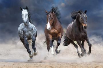Obraz na Szkle Koń Horse herd run free on desert dust against storm sky
