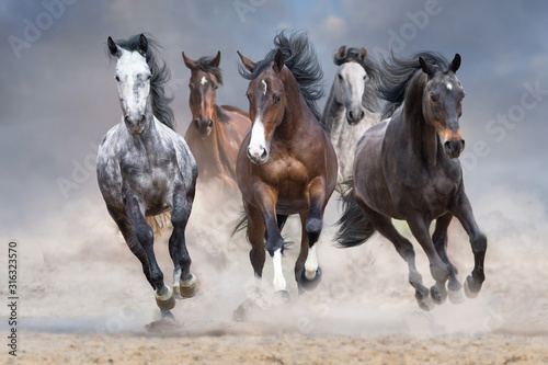 Fototapeta Horse herd run free on desert dust against storm sky obraz