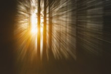 Abstract  Surreal Forest Background, Tree Trunks And Sunlight