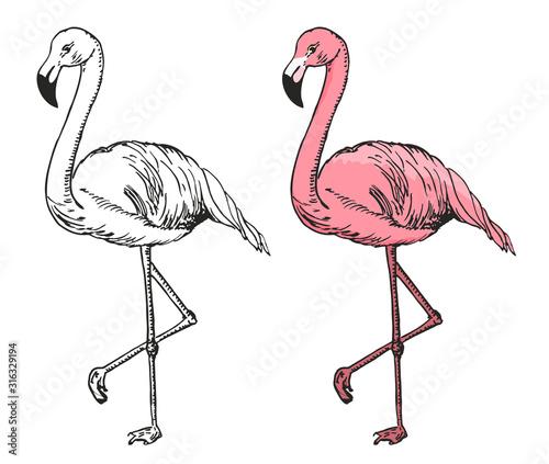 flamingo-szkic-ilustracji-wektorowych-czarno-bialy-i-kolorowy-szkic-flamingo-egzotyczny-ptak
