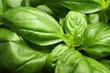 Fresh basil leaves as background, closeup view