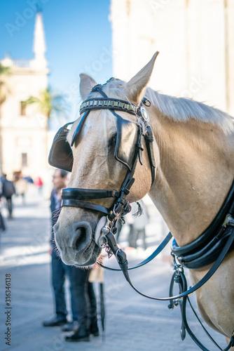 Fotomural  caballo de paseo