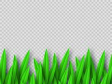 Vector Green Grass Border Isol...