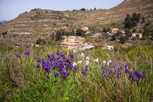 View Of Wild Iris Flower