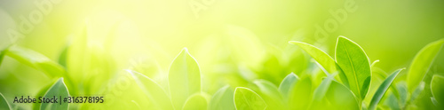 Closeup nature view of green leaf on blurred greenery background in garden with copy space for text using as summer background natural green plants landscape, ecology, fresh cover page concept.