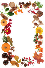 Autumn Background Border With Food, Flowers And Leaves On White Background With Copy Space. Top View. Harvest Festival Theme.