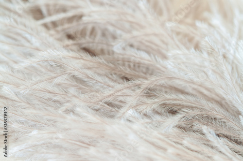 Fluffy ostrich birdy romentic feather with light abstract hair Wallpaper Mural