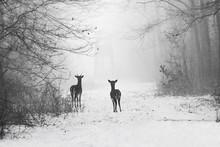 Delicate Wild Deer Silhouette ...