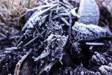 Firewood In An Extinct Campfir...