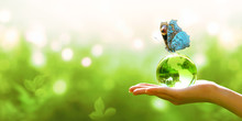Card For World Earth Day. Earth Crystal Glass Globe Ball In Human Hand, Sitting Peacock Eye Butterfly With Blue Wings On Green Background. Saving Environment, Save Clean Planet, Ecology Concept.