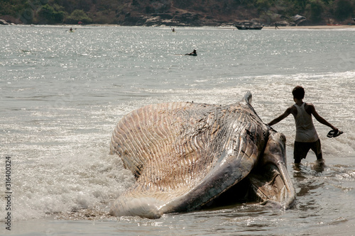 Photo dead whale brought ashore at Palolem Goa