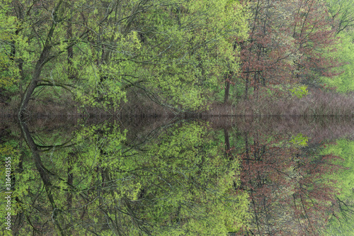 Spring landscape of the shoreline of Crooked Lake with mirrored reflections in c Canvas Print