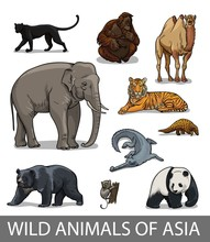 Set Of Wild Asian Animals In C...