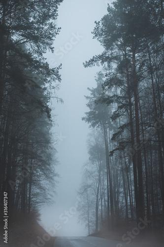 Strasse im Nebel zwischen hohen Bäumen Fototapete