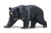 Himalayan Bear Isolated In Cartoon Style. Educational Zoology Illustration, Coloring Book Picture.
