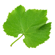 Grape Leaf Isolated On White. ...