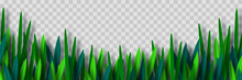 Vector Green Grass Border Isolated On Transparent Background. Paper Cut Style. Spring Or Summer Plant Leaves.