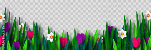 Vector spring flower border with tulips and narcissus, isolated on transparent background Canvas Print