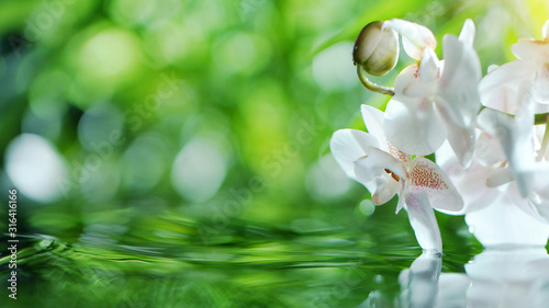 Fototapeta Waving water surface with orchid blossoms obraz
