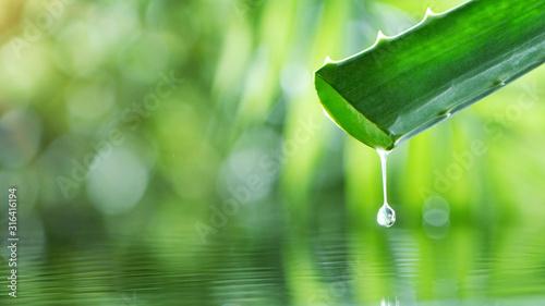 Fotografiet Dropping aloe vera liquid from leaf.