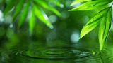 Palm leaves with water surface