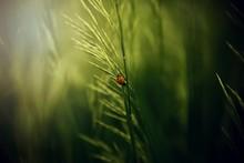 Bug On A Leaf