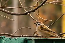 Bird Sparrow With Seed Close Up