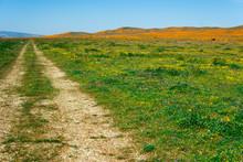 Dirt Road Through Poppy Fields In California