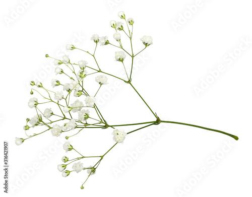 Closeup of small white gypsophila flowers