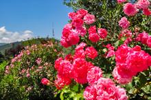Flowers In Garden Near Holy Tr...