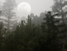 Trees In Fog With Moon