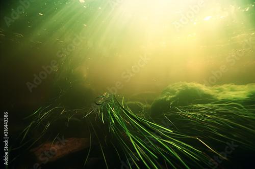 underwater-freshwater-green-landscape-underwater-landscape-of-the-lake-ecosystem-algae-green-water-fresh-water