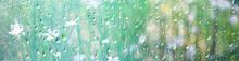 Summer Rain Wet Glass / Abstra...
