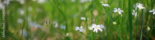 Fotografia  wild wildflowers field / nature landscape, abstract background view summer flowe