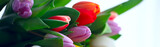 Fototapeta Tulipany - bouquet of colorful tulips / spring flowers, bright beautiful flowers, spring gift concept
